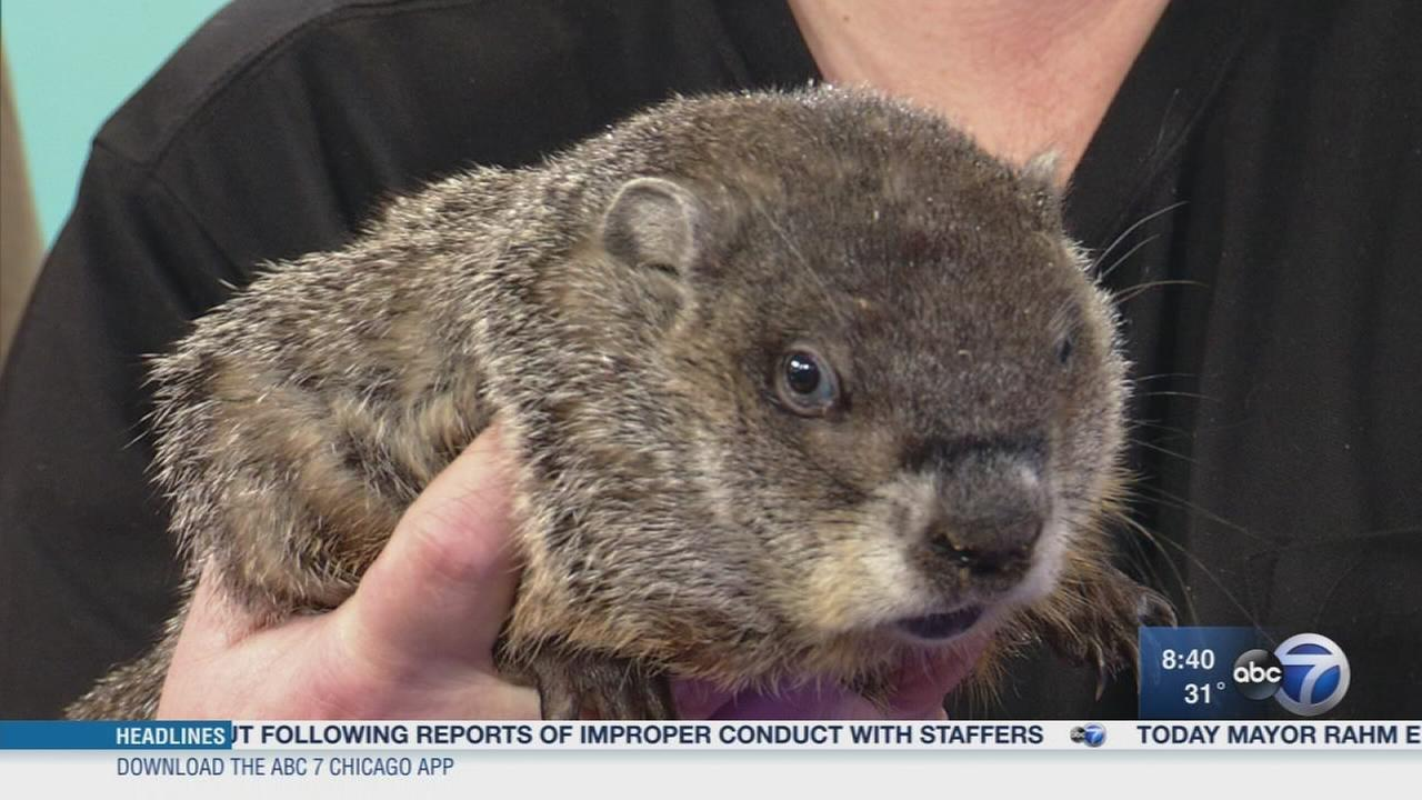 Annual Groundhog Days festival to be held in Woodstock