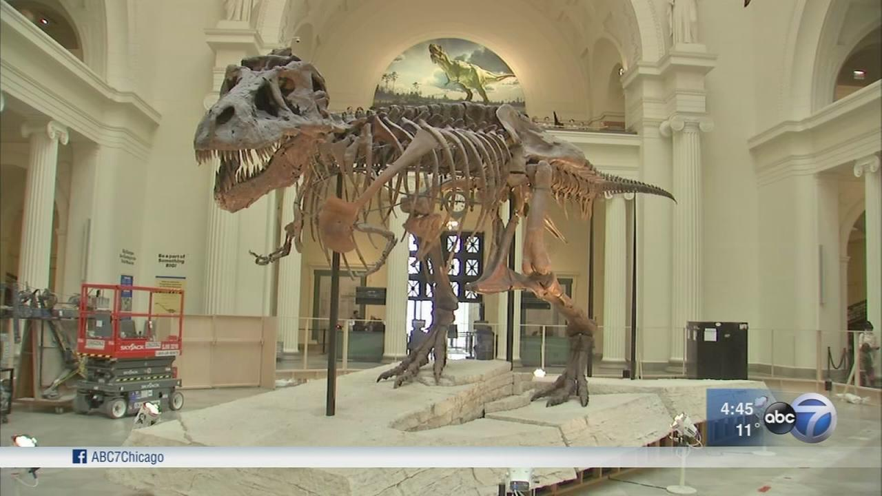 Sue the T-Rex gets a new home at Field Museum