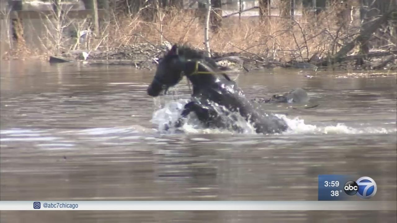 Horses, llama rescued from floodwaters