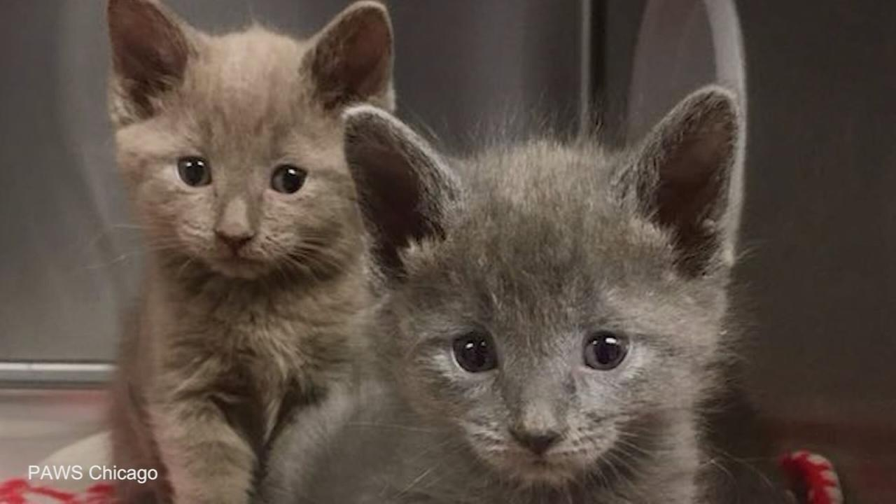 More than 30 cats, kittens rescued from fire in need of foster homes