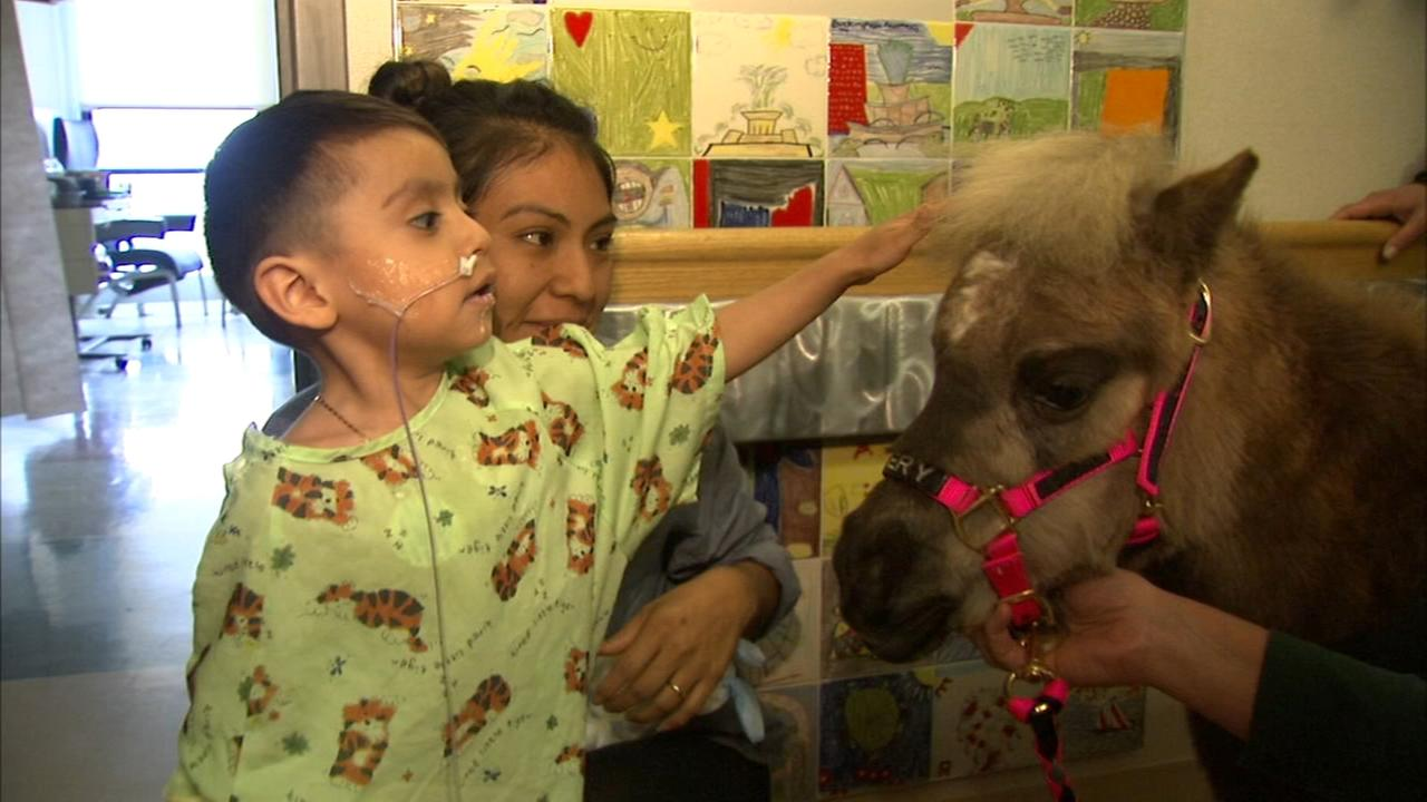 Therapy horses bring comfort to Loyola pediatric patients
