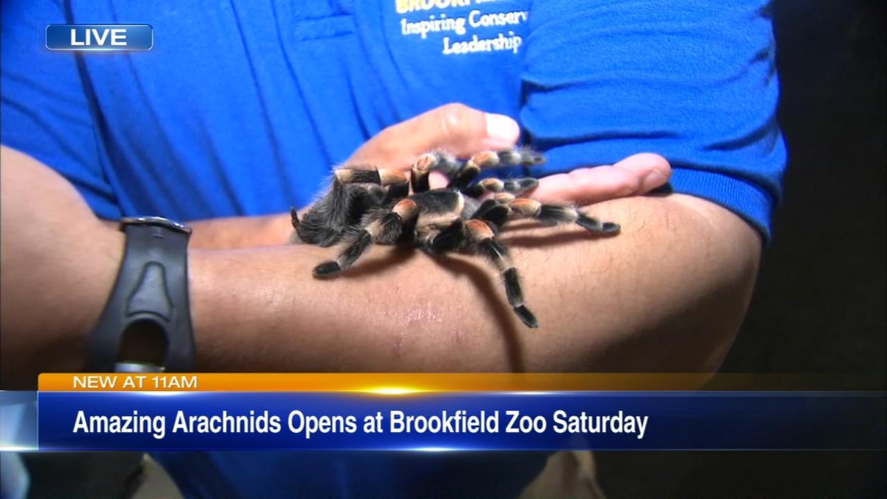 New Brookfield Zoo spider exhibit opens Saturday