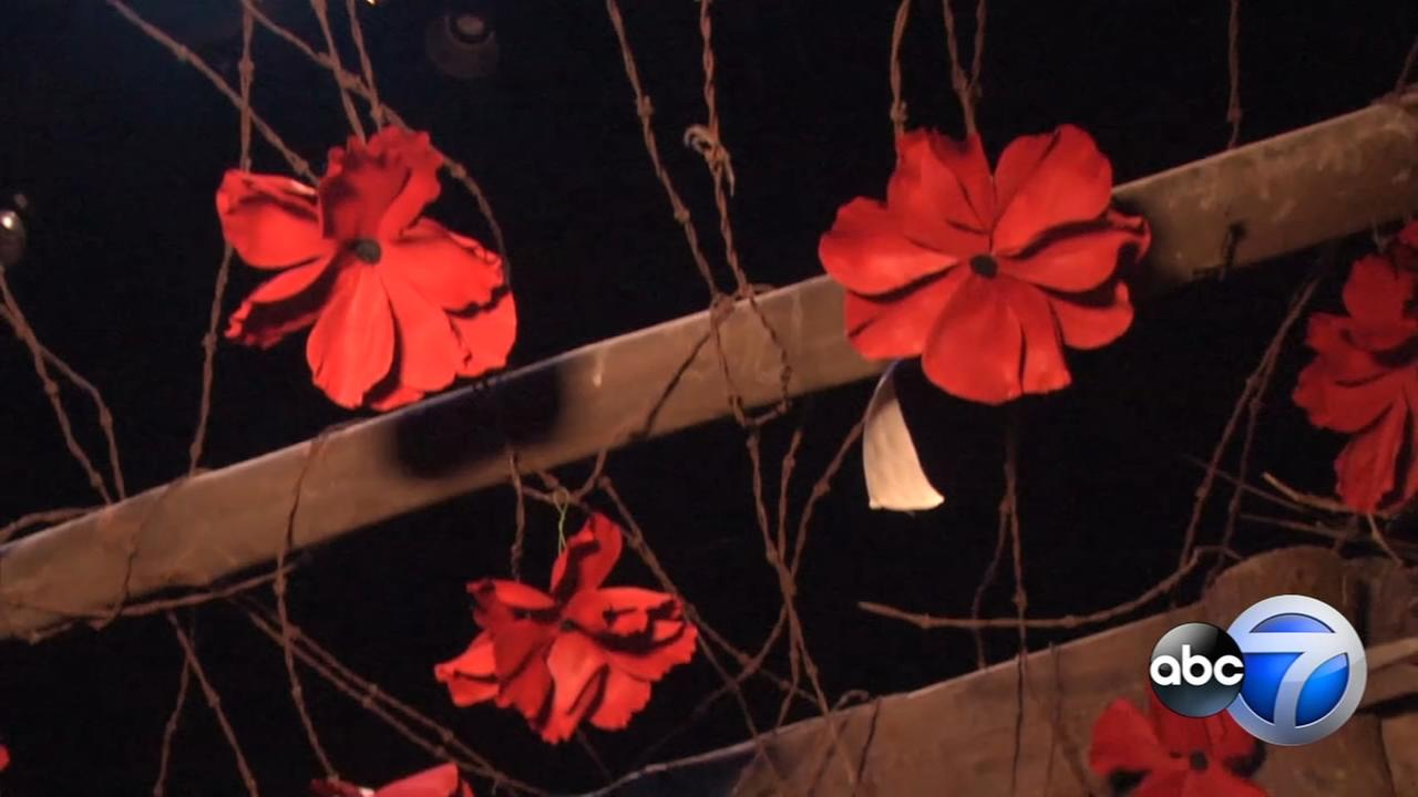 2,000 poppies displayed in honor of WWI casualties