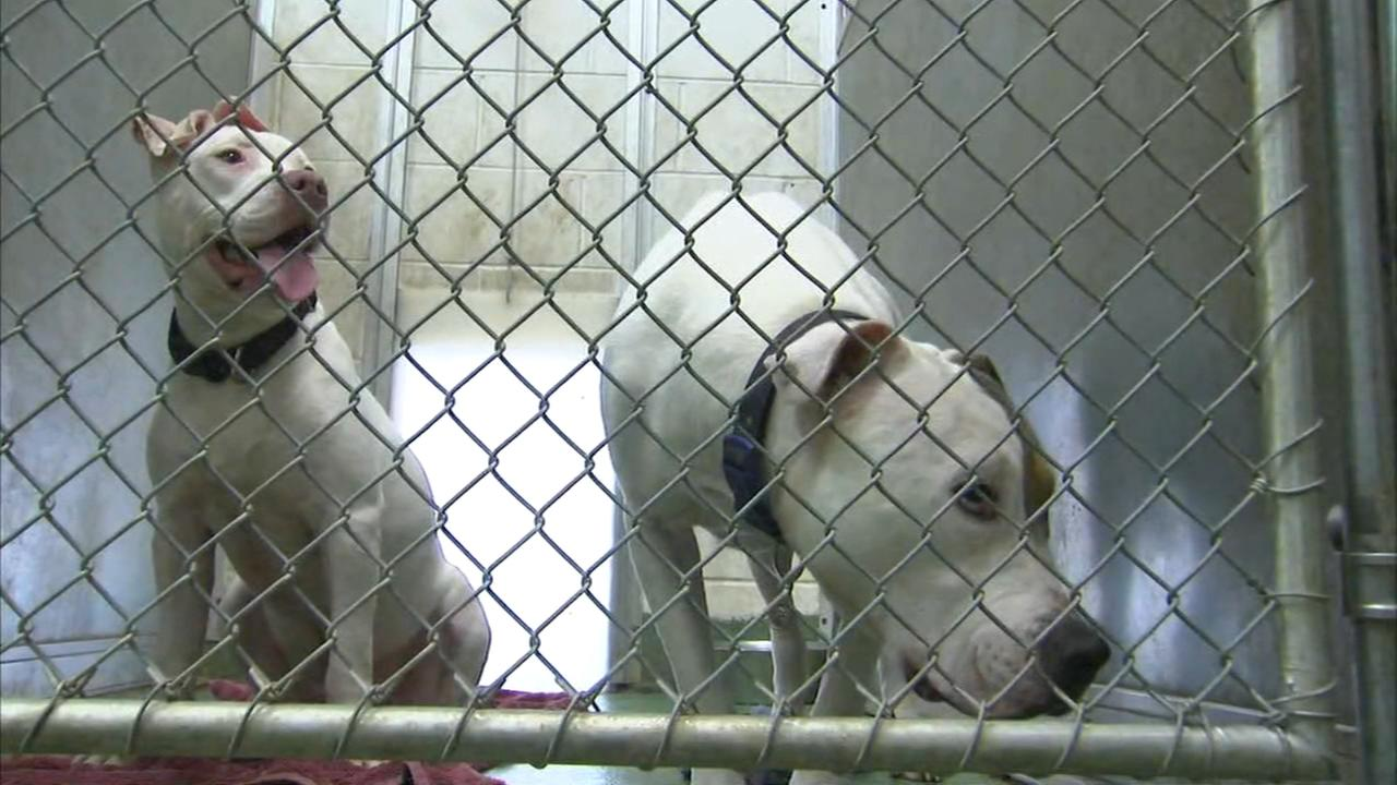 Huntley animal shelter tries to keep dogs cool after air conditioner breaks