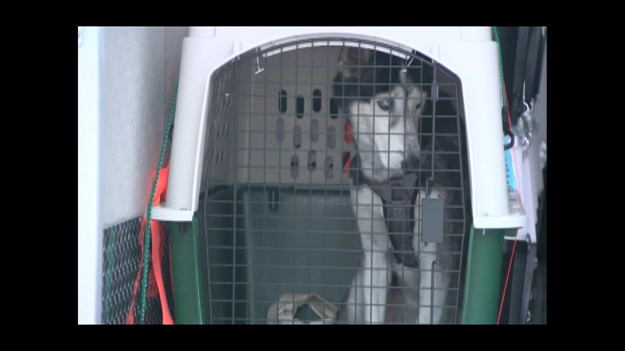 Dogs flown in from Puerto Rico
