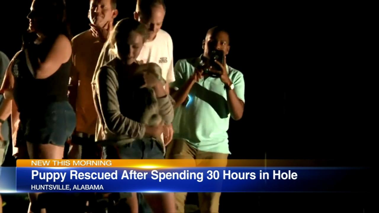 Puppy rescued after 30 hours in hole
