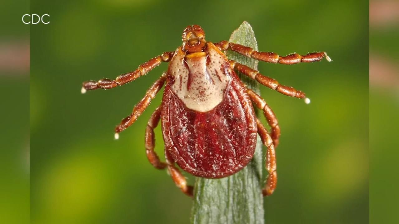 Consumer Reports: Protect your family from ticks