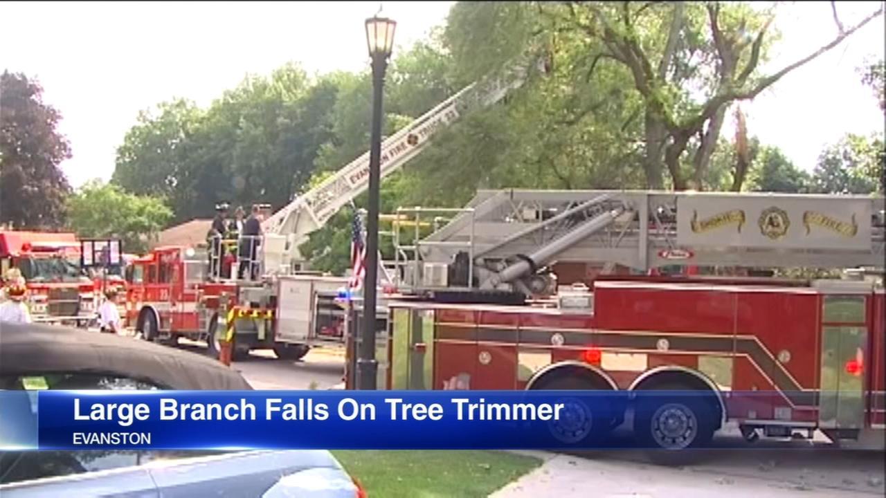 Evanston tree trimmer critically injured in accident