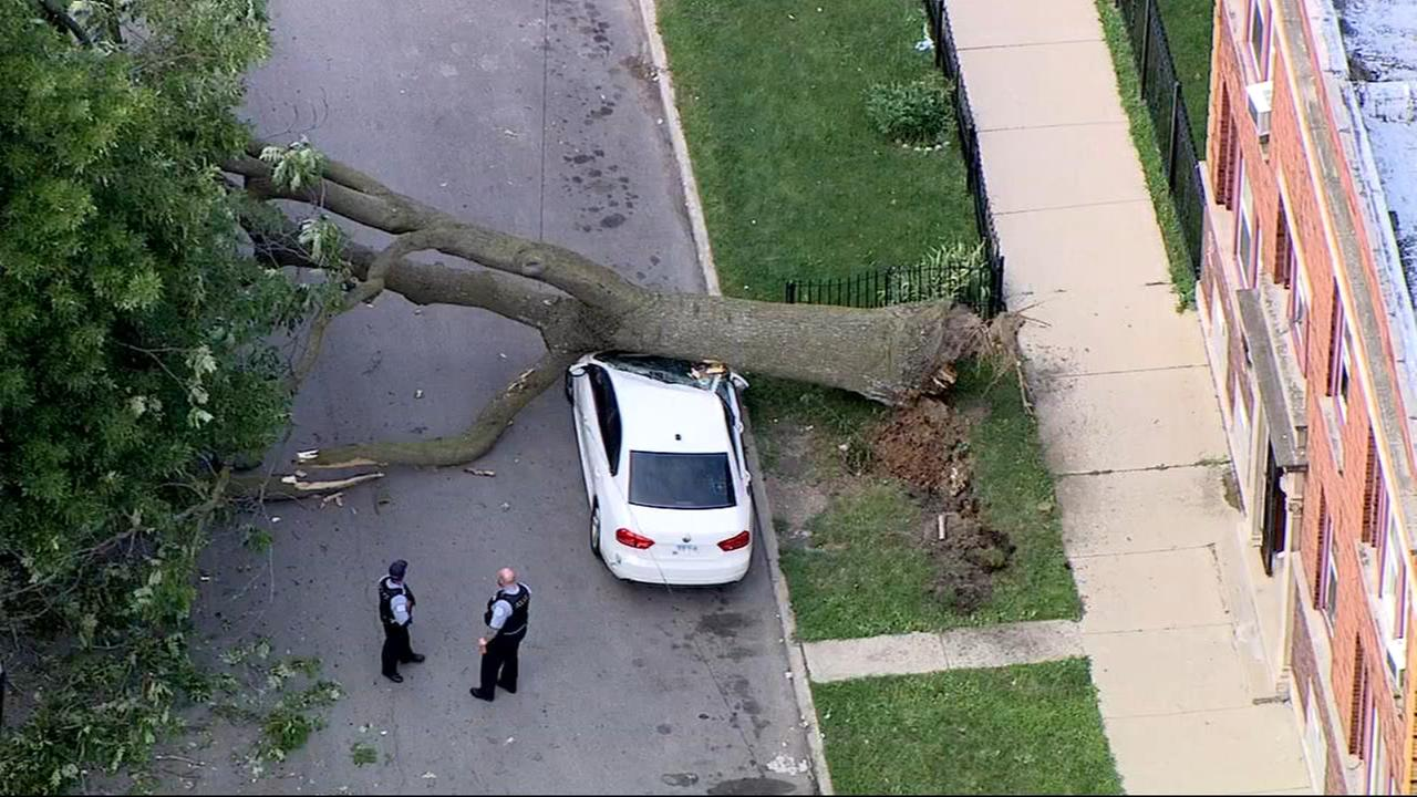Tree crushes parked car in Englewood