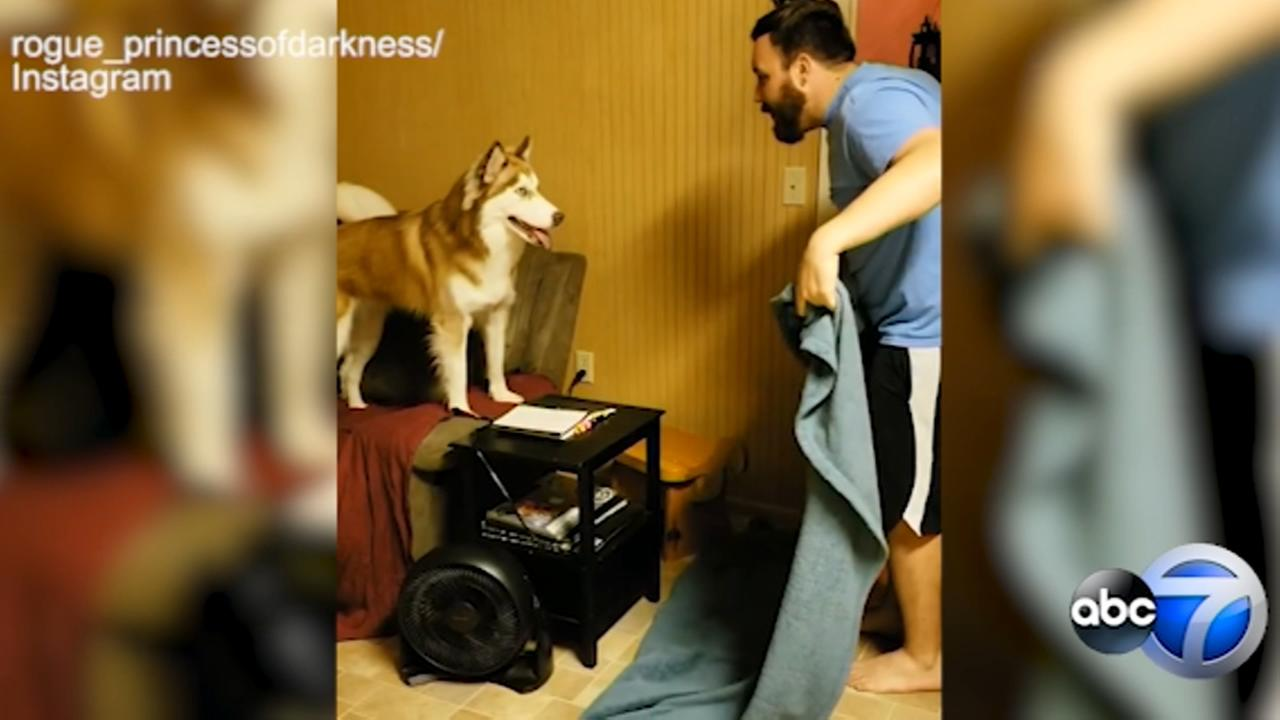 Are pups really pranked by What the Fluff challenge?