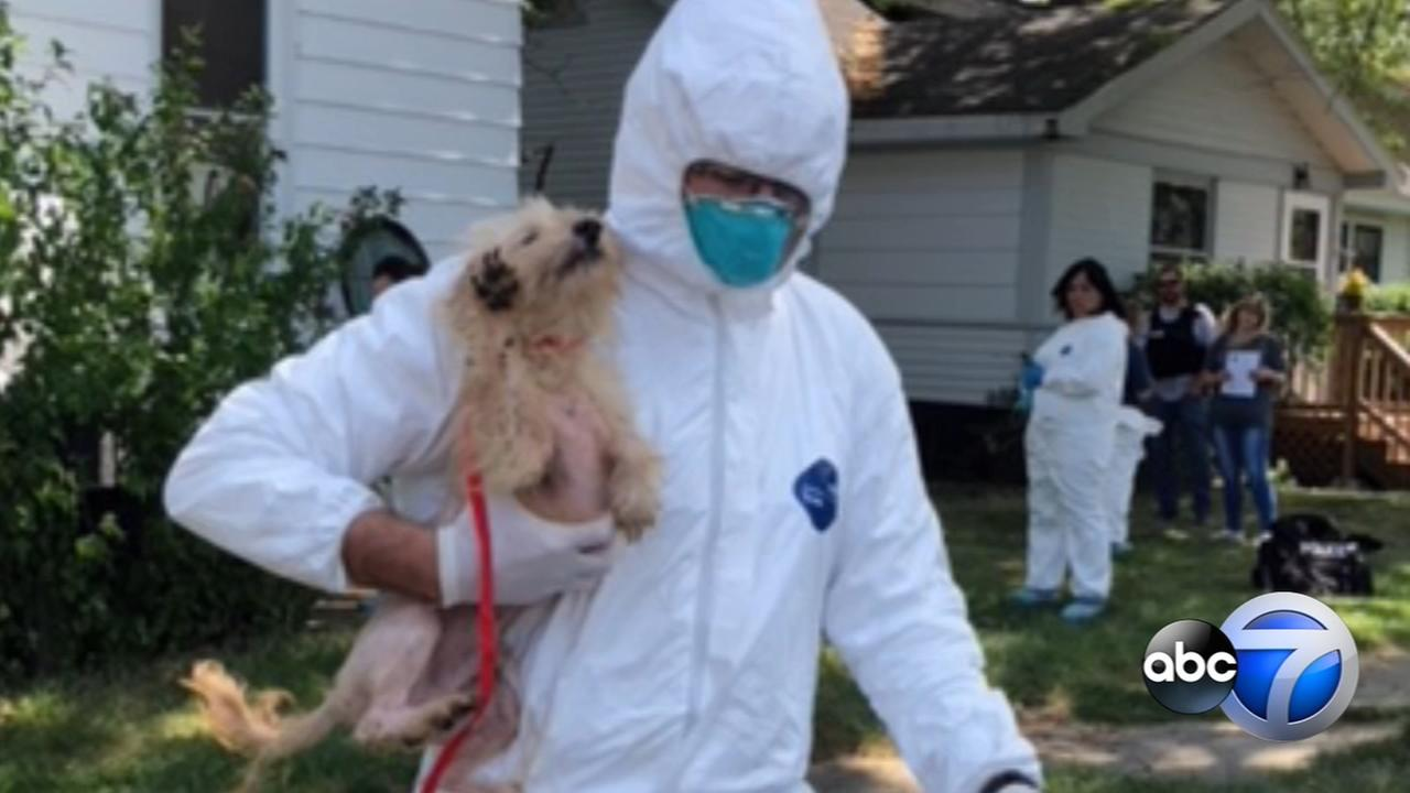35 dogs removed from home after woman found covered in feces