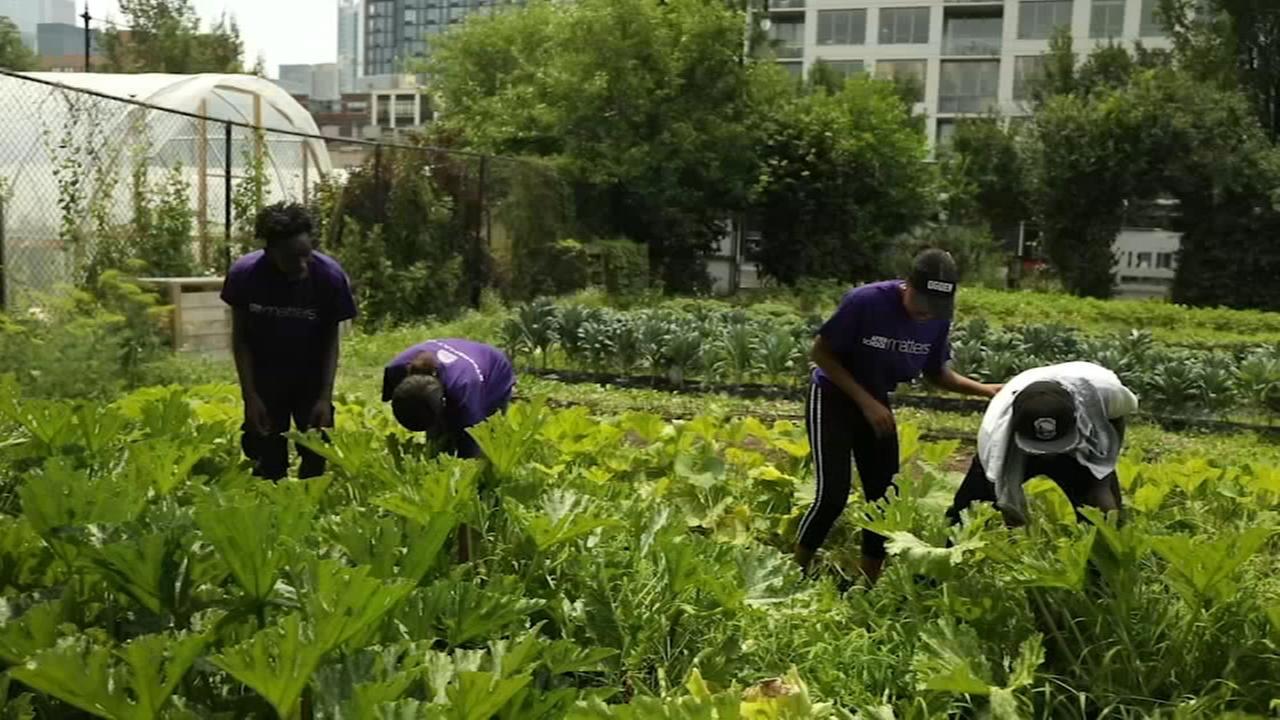 Newsviews Part 1: Chicago urban agriculture