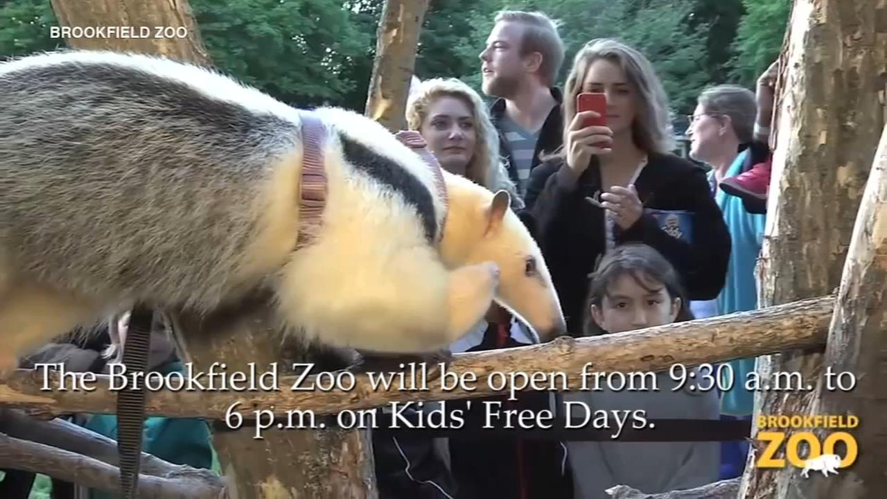 Brookfield Zoo offering free days for kids this week