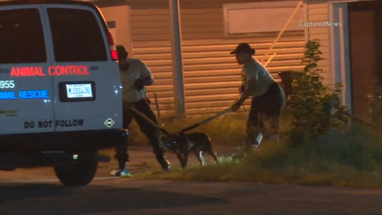 2 women attacked by pit bull, dog hit with shovel in Burnside