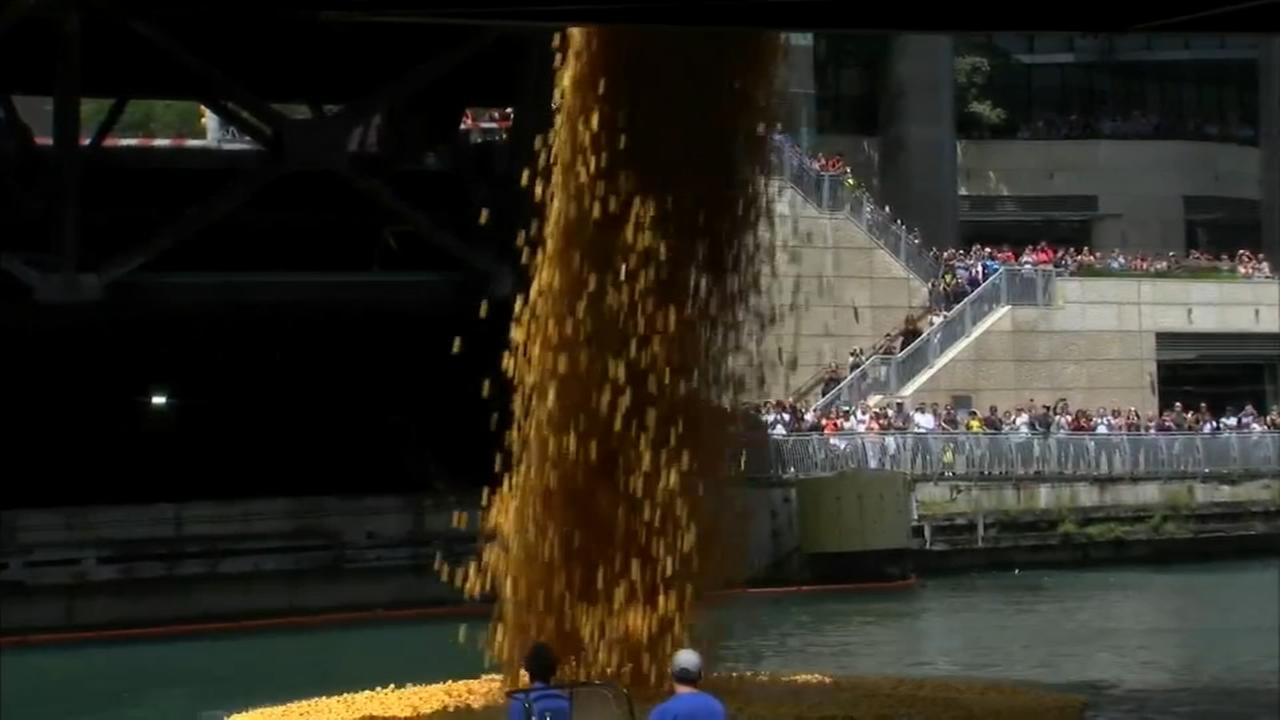 60,000 rubber ducks float down river in Chicago Ducky Derby