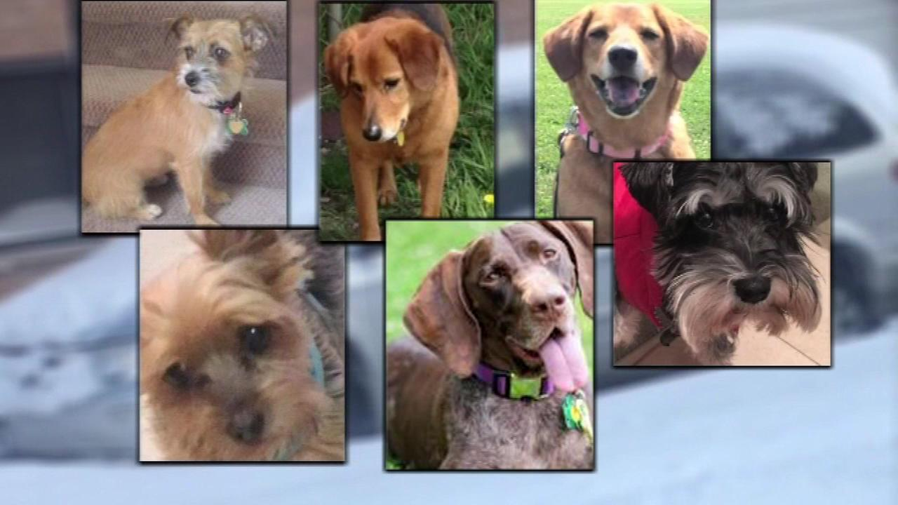 Kidnapped dogs found inside stolen van in Chicago