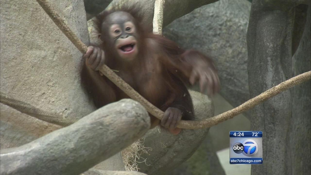 Kecil learns ropes at Tropic World Asia