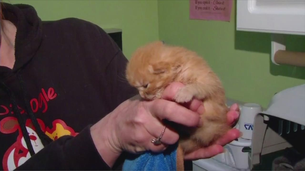 Miracle kitten found in rubble days after Indiana fire