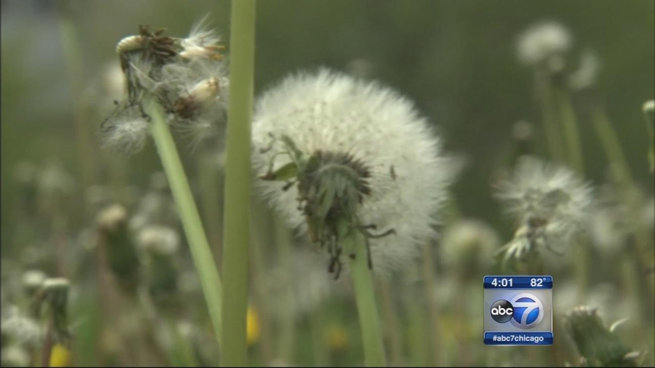 Pollen counts soar on warm, breezy day