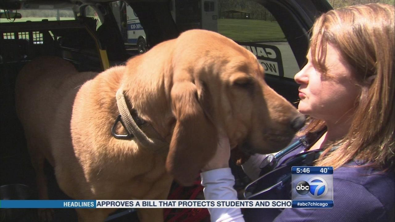 Chicago vet cares for dogs in the field with pet ambulance