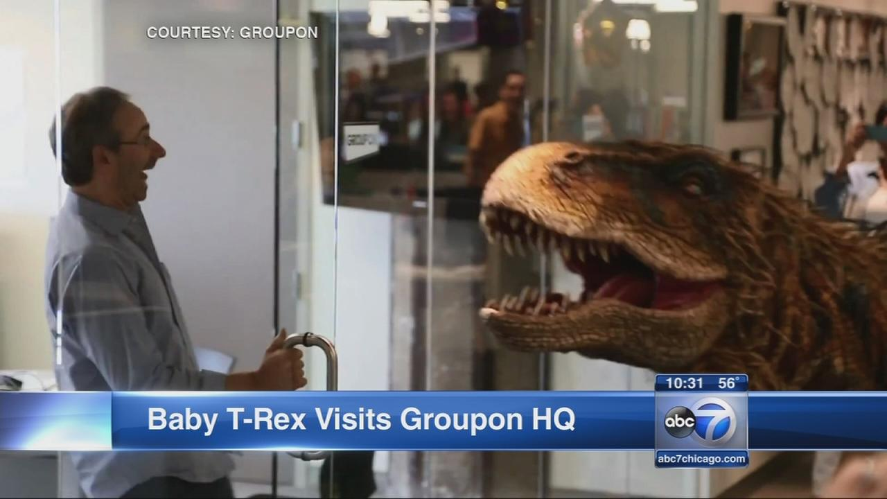 Dinosaur startles employees at Groupon office