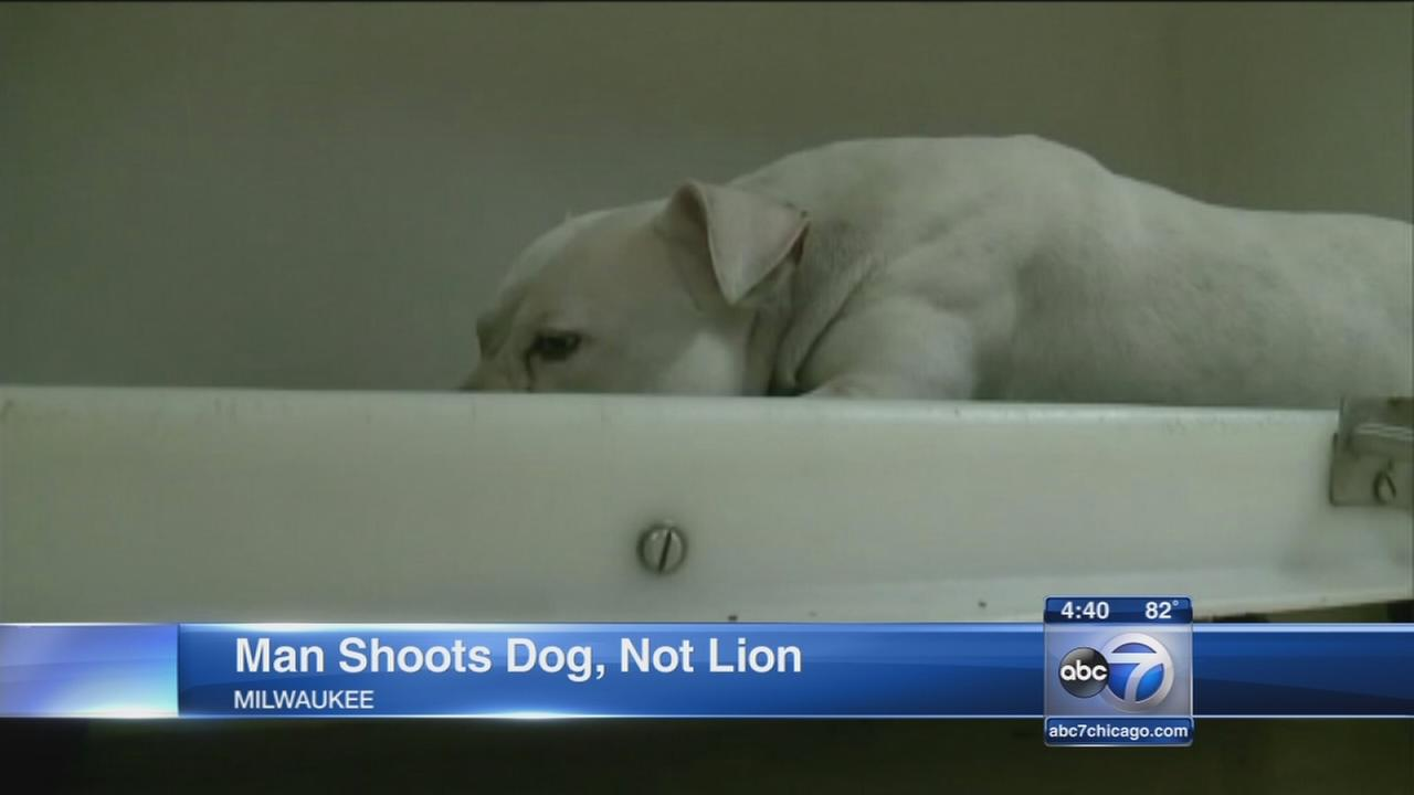 Dog mistaken for lion shot