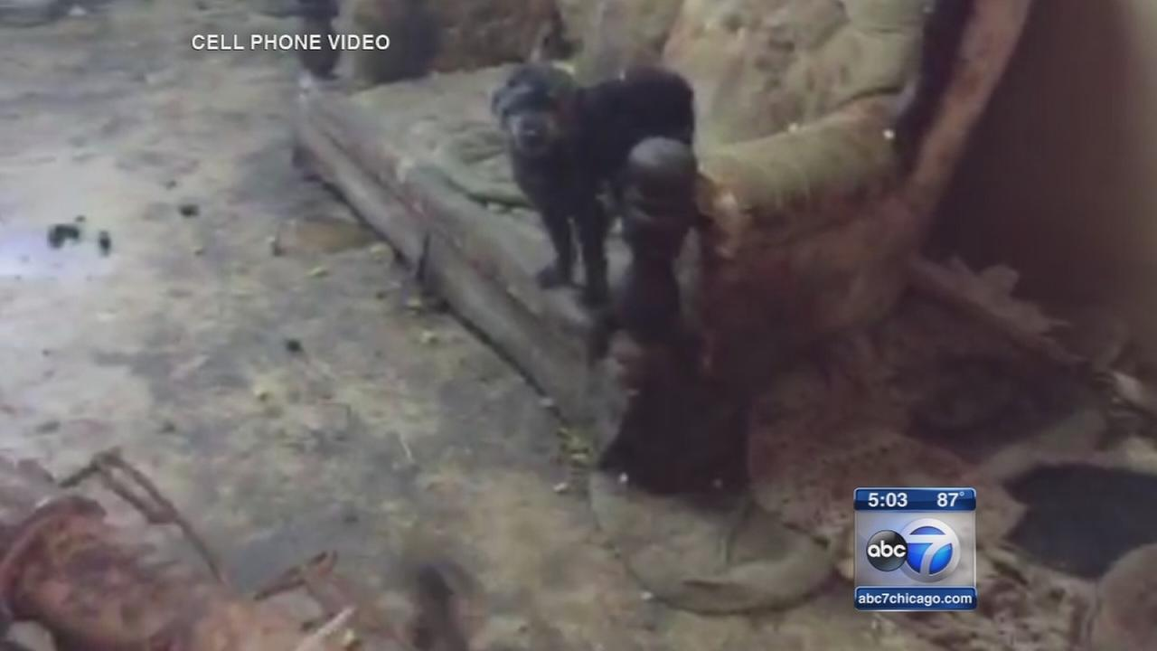 70 animals rescued from Steger home