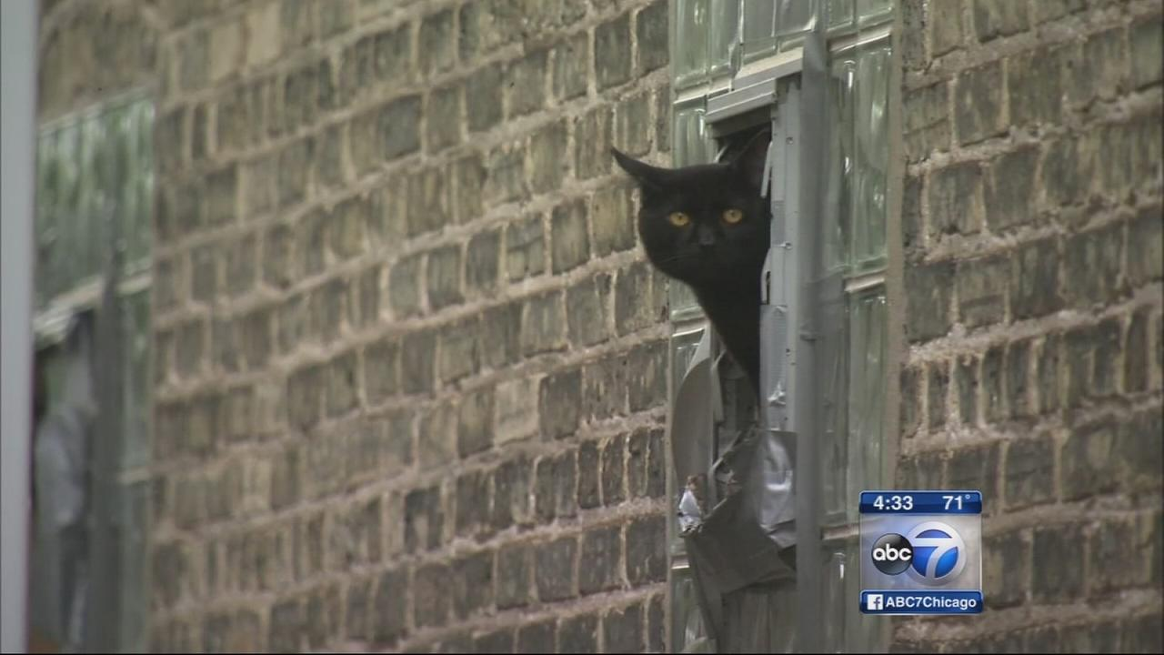 Dozens of cats found in home