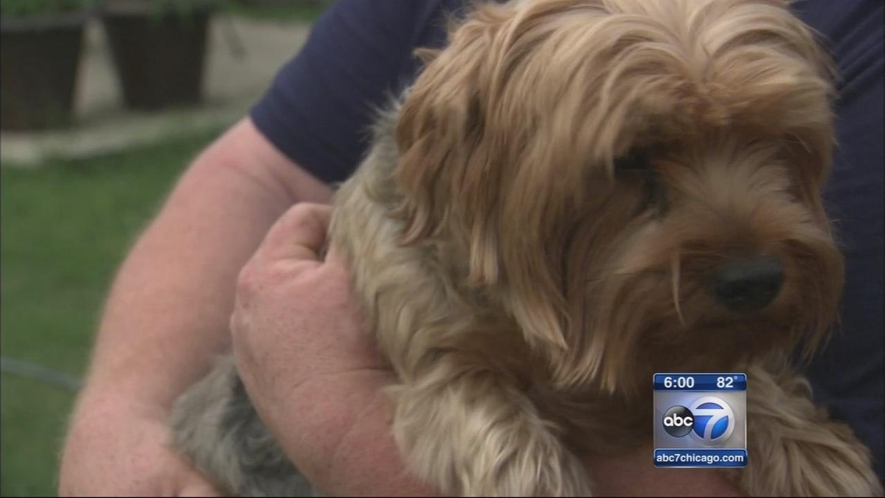2 dogs got flu from Evanston PetSmart, owners say