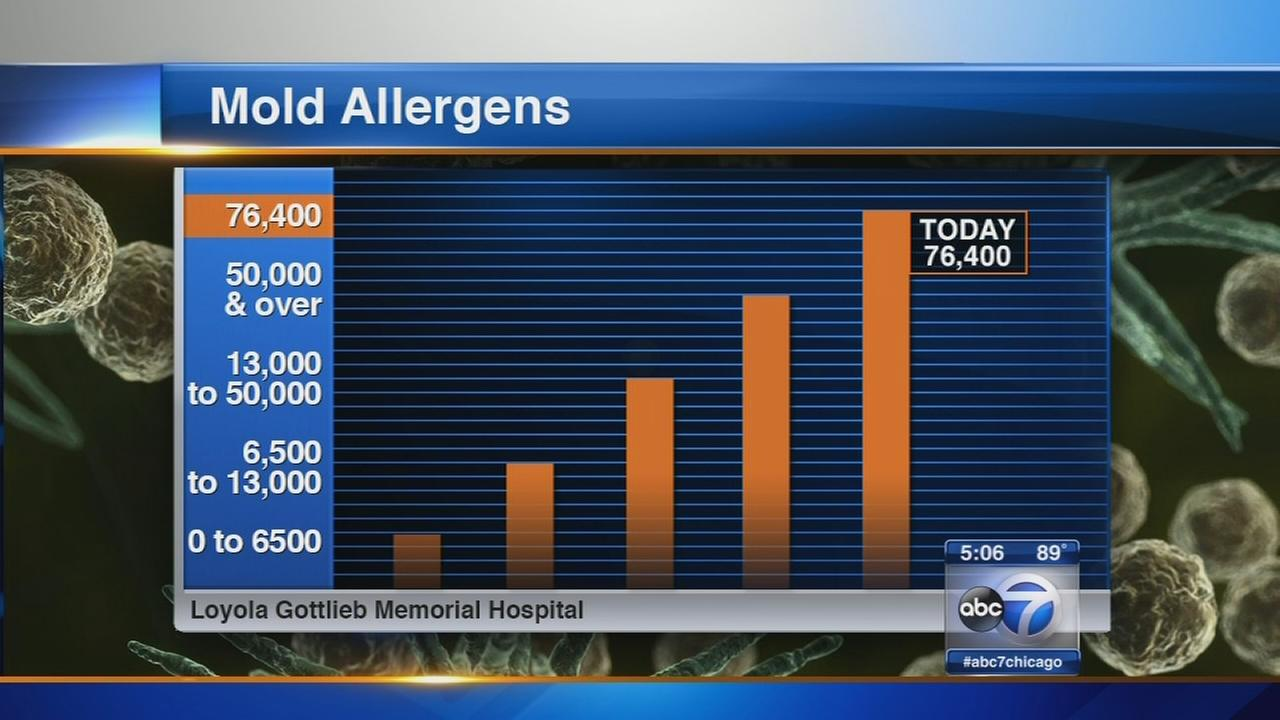 Traffic School To Go >> High mold counts in Chicago area aggravate allergy ...
