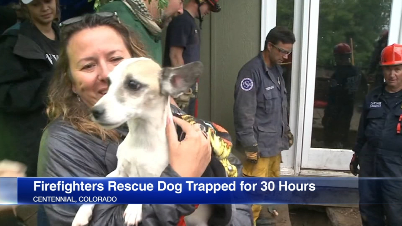 A Colorado dog got herself in some deep trouble after chasing a rabbit and becoming stuck for many hours underneath her own house.