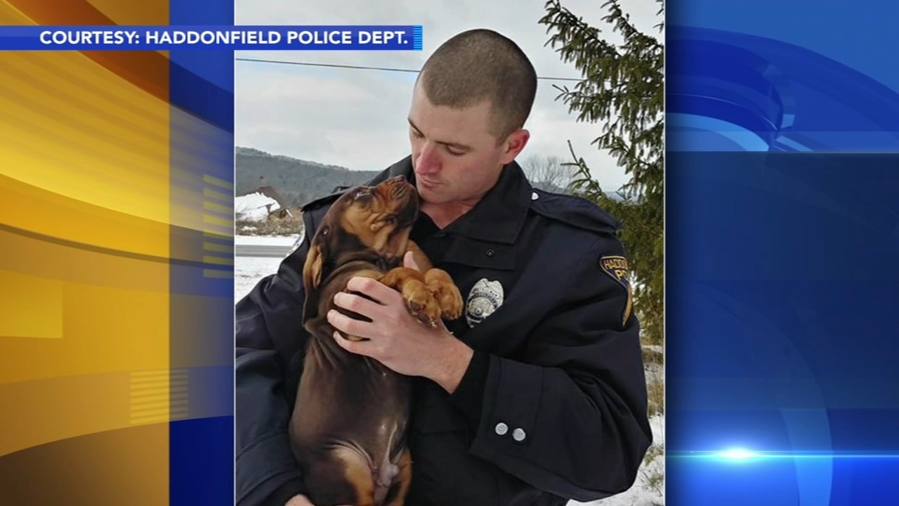 Haddonfield Police welcome their first K9 officer, Blue. Watch the report from Action News at 4 p.m. on January 4, 2019.