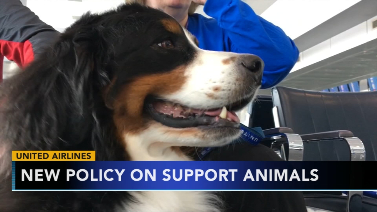 United Airlines changes policy for emotional support animals. Nydia Han reports during Action News at 9 a.m. on January 6, 2019.