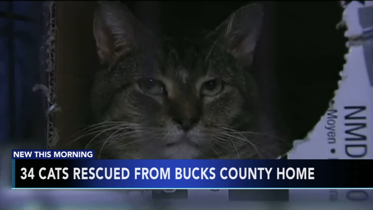 34 cats rescued from Bucks County home. Tamala Edwards reports during Action News Mornings on January 7, 2019.