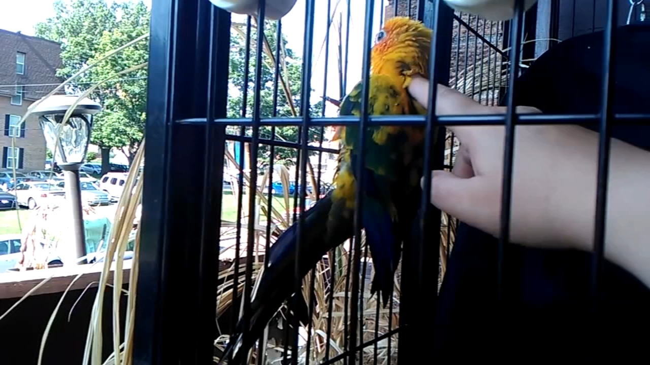 2 parrots stolen from NE Philadelphia apartment: Sarah Bloomquist reports on Action News at 6 p.m., January 8, 2019