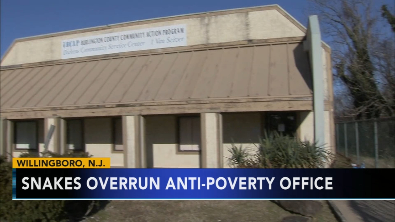 Snakes overrun anti-poverty office in Willingboro. Jim Gardner reports during Action News at 6 p.m. on January 11, 2019.