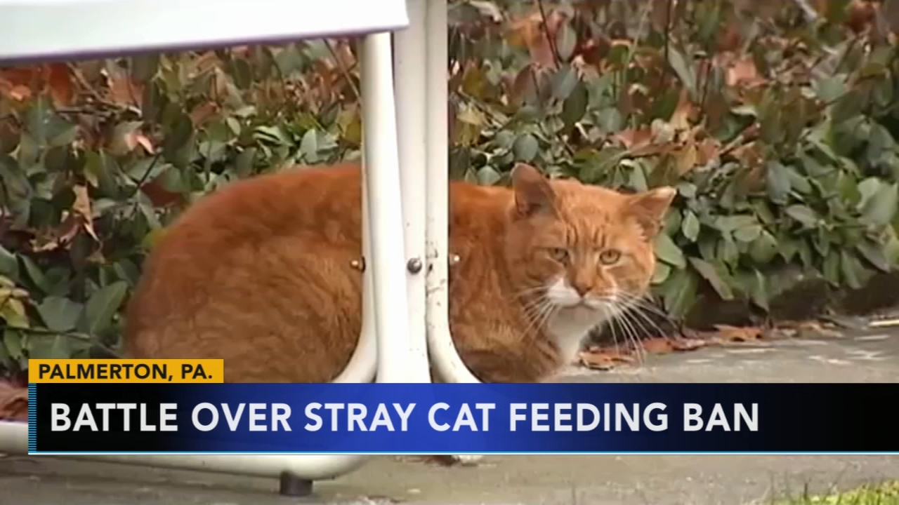Battle over stray cat feeding ban in Palmerton, Pa. Tamala Edwards reports during Action News Mornings on January 11, 2019.