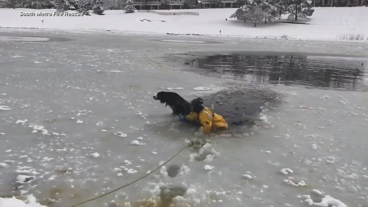 Firefighters rescue dog on icy pond in Colorado.