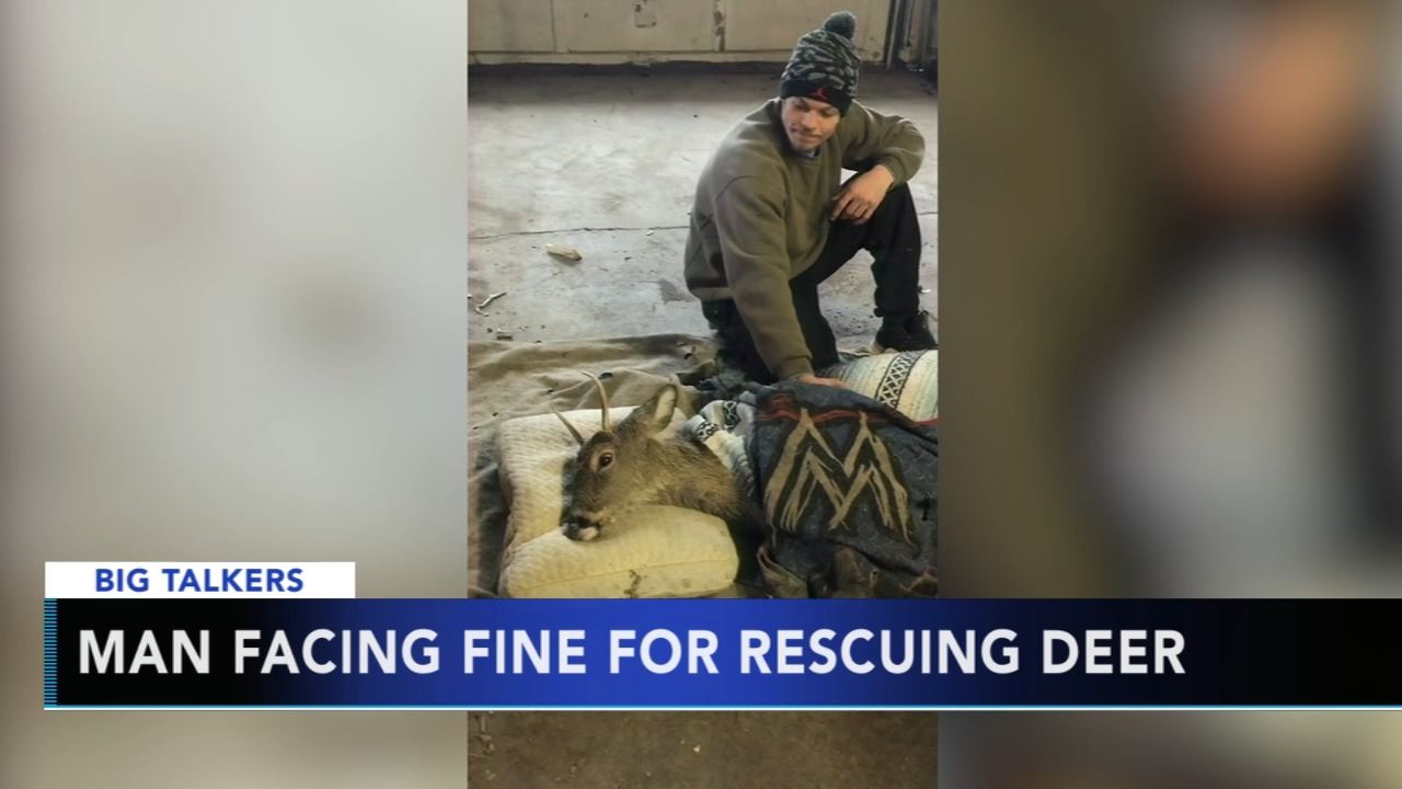 Man facing fine for rescuing a deer. Alicia Vitarelli reports during Action News at 4:30 p.m. on January 16, 2019.