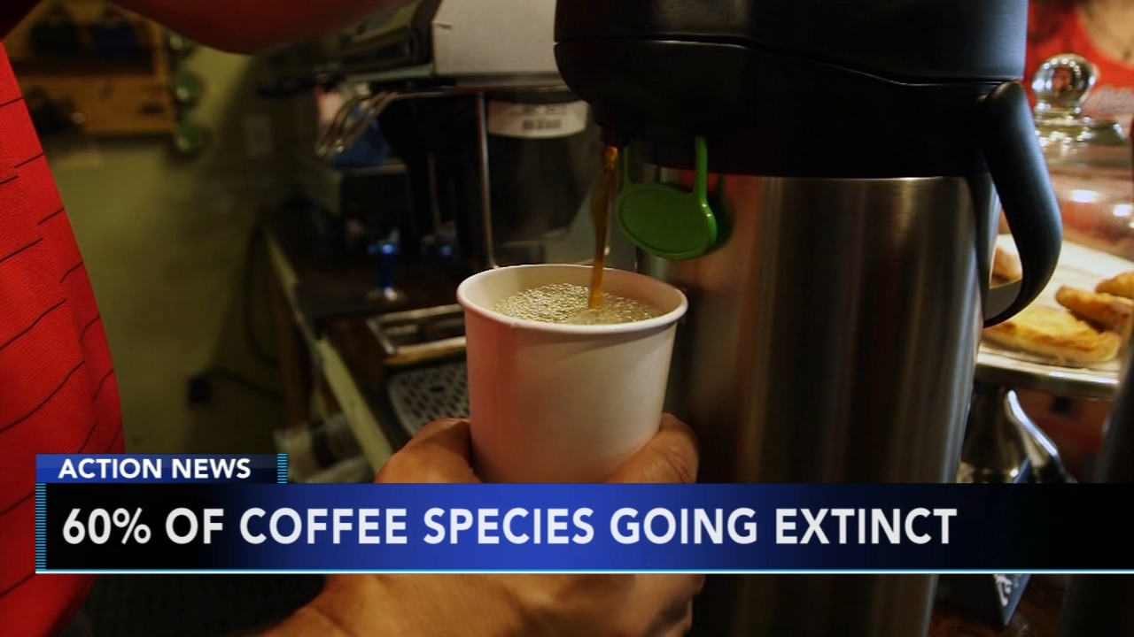 Research shows 60-percent of coffee species may soon go extinct. Gray Hall reports during Action News at 9 a.m. on January 19, 2019.