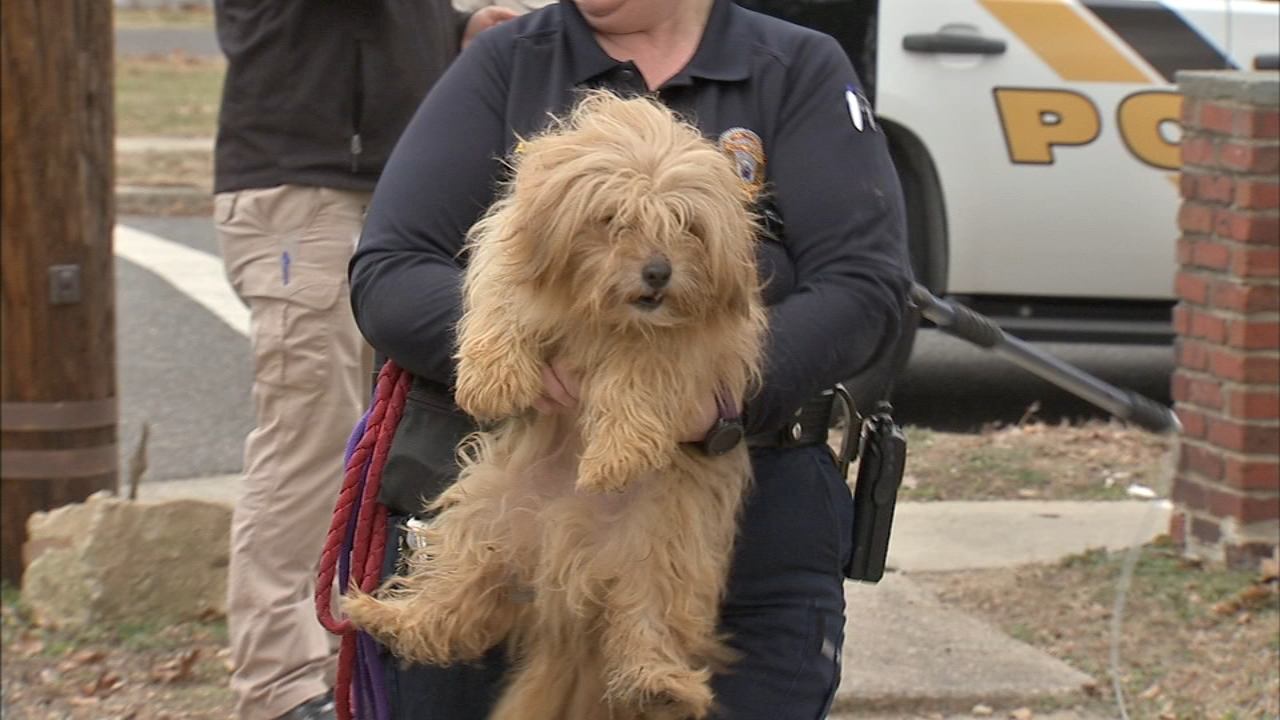 Dogs, cats removed from boarded-up home in Burlington Co. Jeannette Reyes reports during Action News at Noon on January 23, 2019.