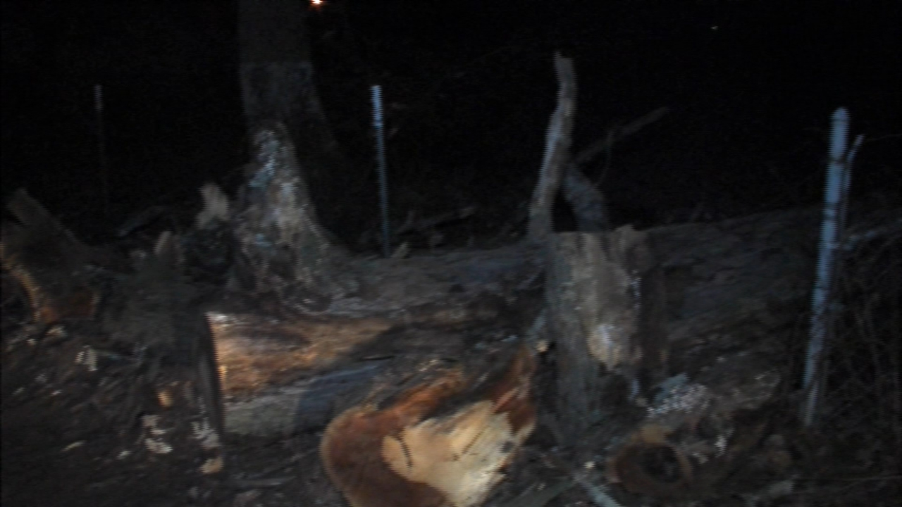 Large tree falls, knocks out power in Pemberton Twp. Matt ODonnell reports during Action News Mornings on January 24, 2019.