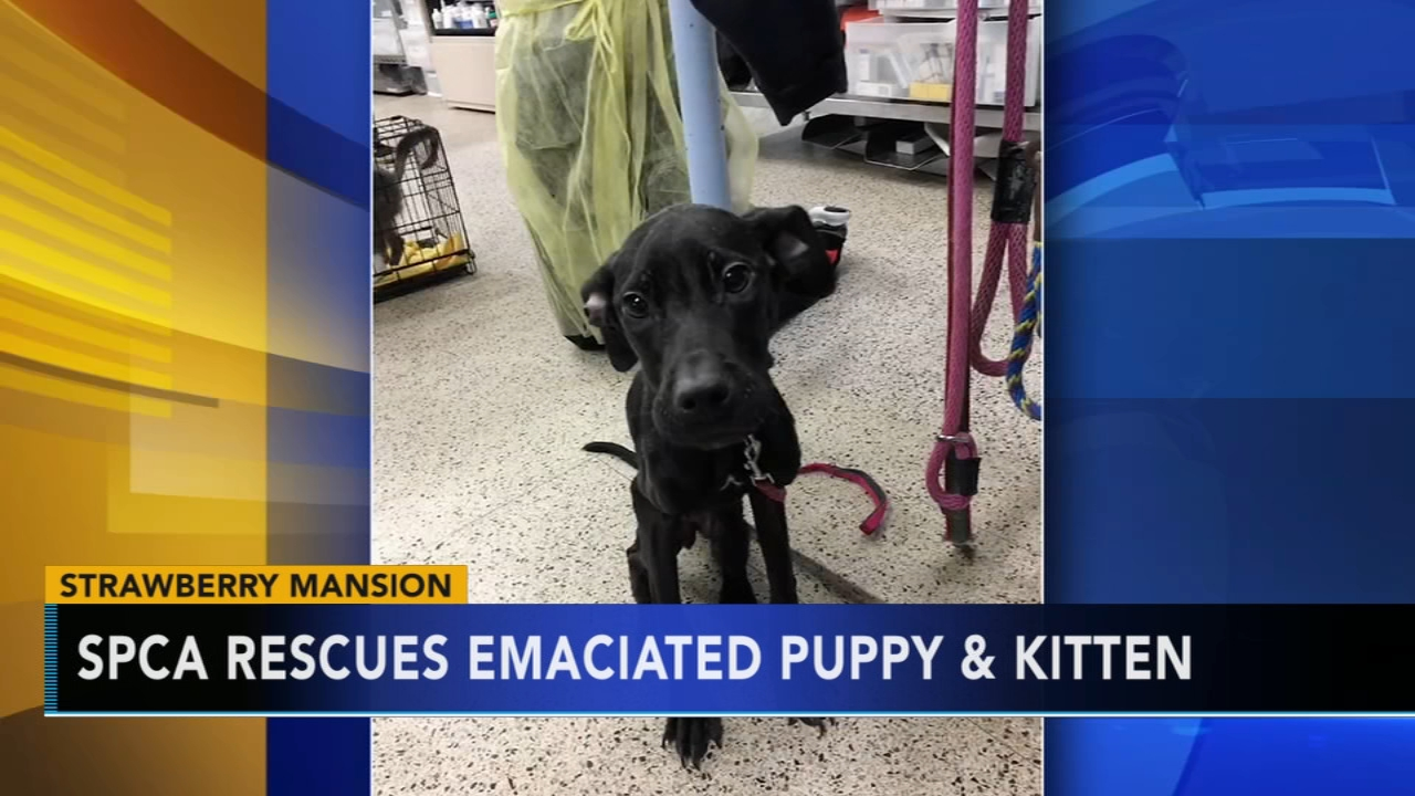 Charges pending against pet owner who left emaciated pets in basement as reported during Action News at 11 on January 30, 2019.
