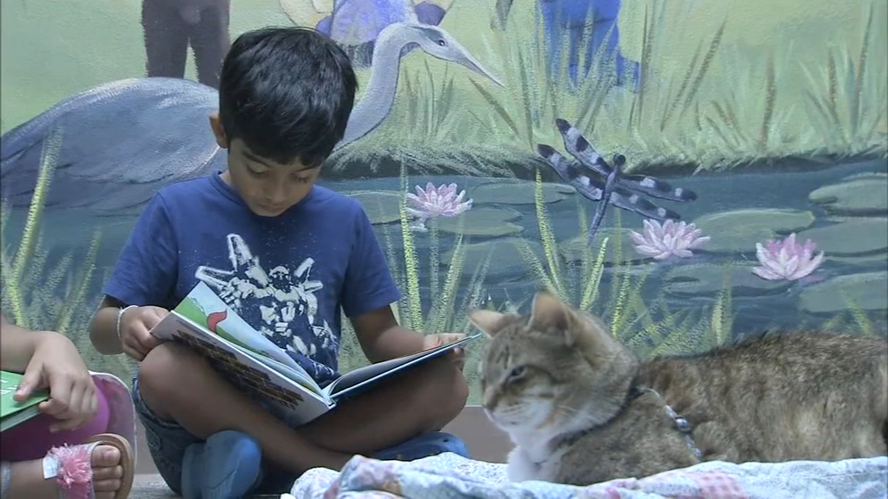 Children practice reading with Voorhees library cat. Alicia Vitarelli reports during Action News at 6 a.m. on August 10, 2018.