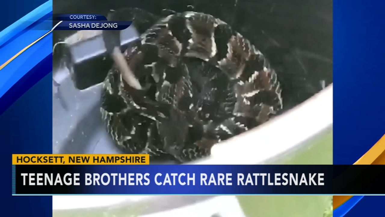 Teens use pointers from reality TV show to catch rattlesnake. Jeannette Reyes reports during Action News at 9 a.m. on August 12, 2018.