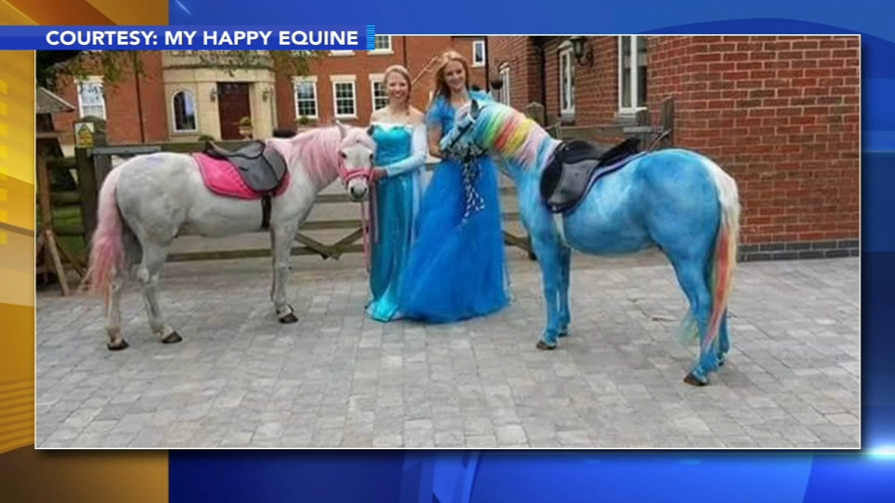 Pony painting party trend stirring up controversy. Alicia Vitarelli reports during Action News at 4 p.m. on August 17, 2018.
