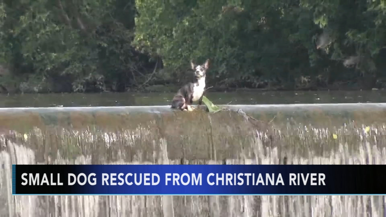 Small dog rescued from Christiana River. Sharrie Williams reports during Action News at 4 p.m. on August 17, 2018.