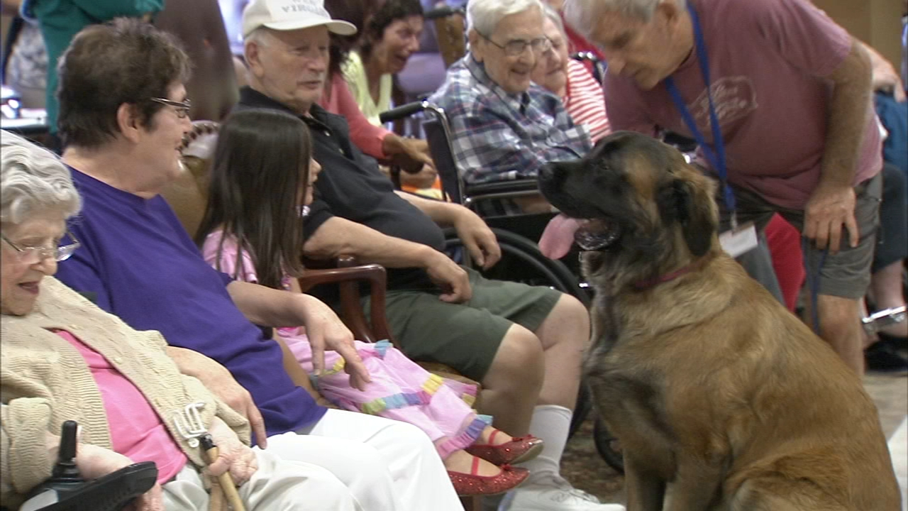 Pooches came to to play and provide puppy love to residents of Holy Redeemer Saint Joseph Manor as reported during Action News at 4 on August 23, 2018.