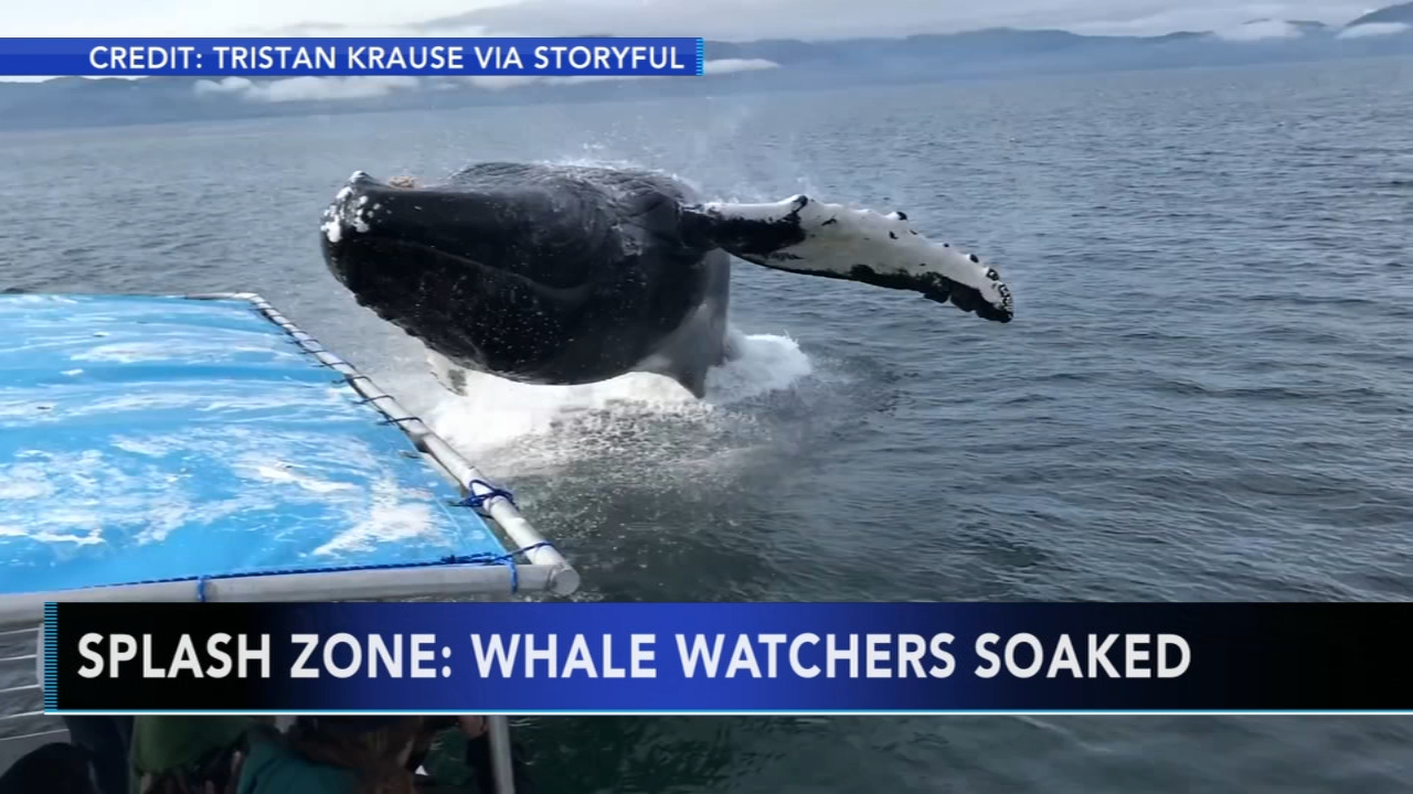 Whale watchers get a soaking off Alaskan Coast. Matt ODonnell reports during Action News Mornings on August 22, 2018.