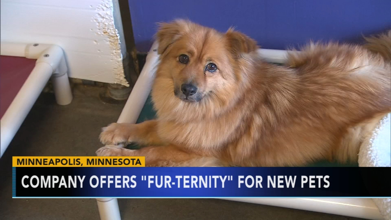 Minneapolis company offering fur-ternity leave for those with new pets. Gray Hall reports during Action News at 9 a.m. on August 26, 2018.